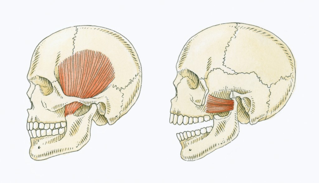 Temporomandibular Joint (TMJ) - Concept Dentaire rive-sud